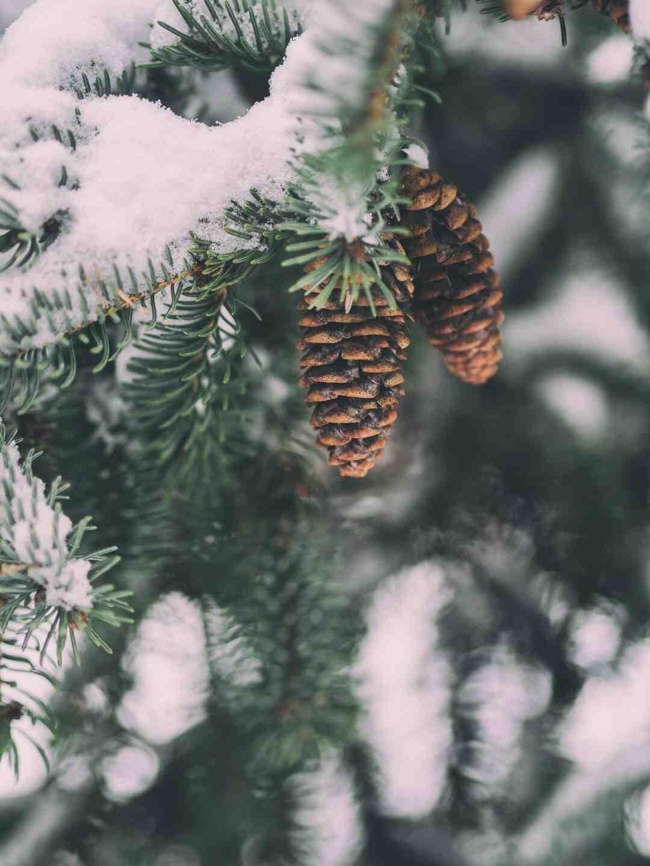 Quelle est l'alternance des Jeux d'été et d'hiver ?